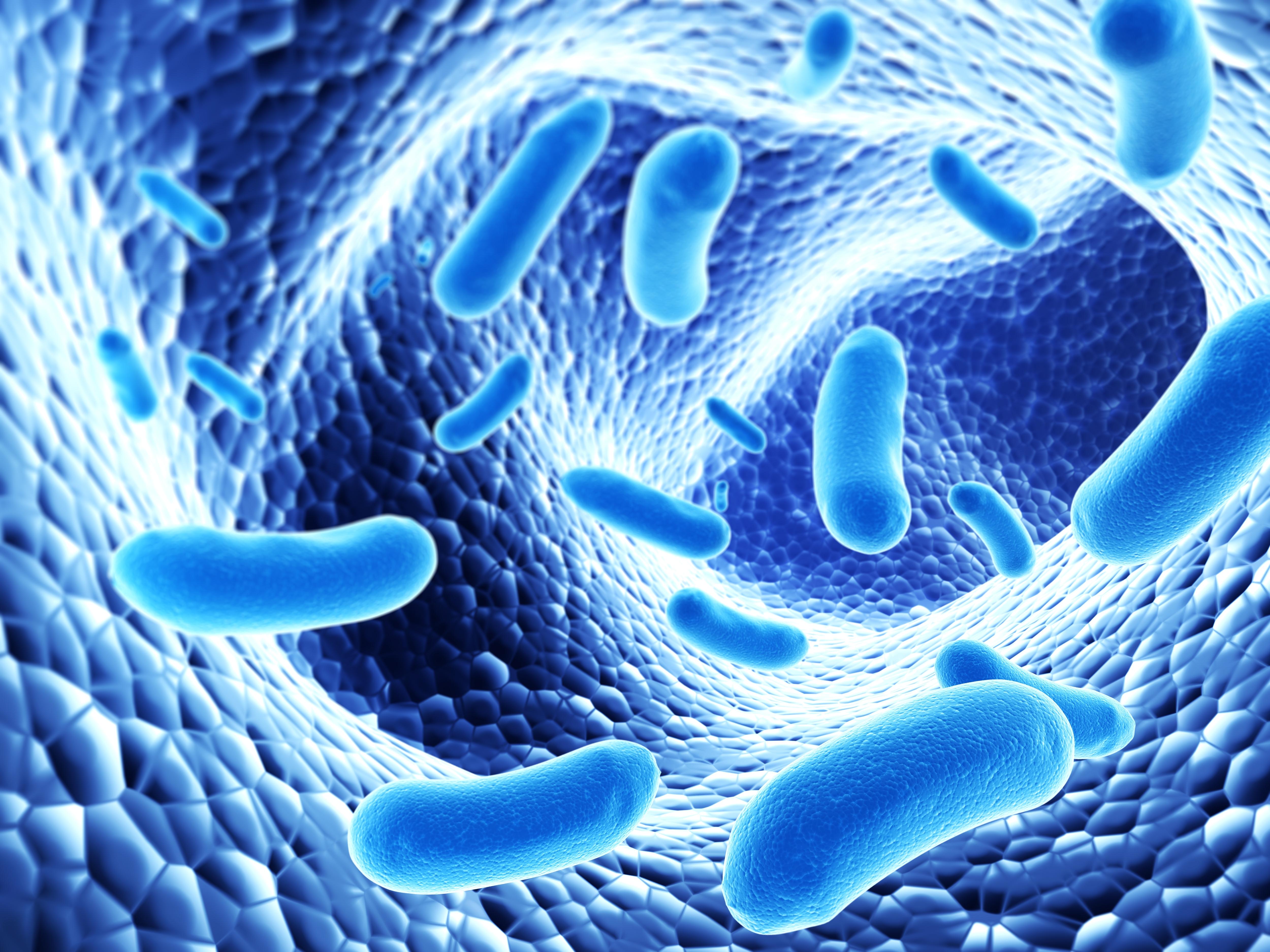Kasulikud bakterid